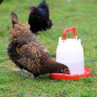 Combo 3 litre drinker & chicken