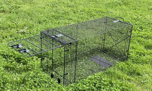 Live Catch Fox Trap