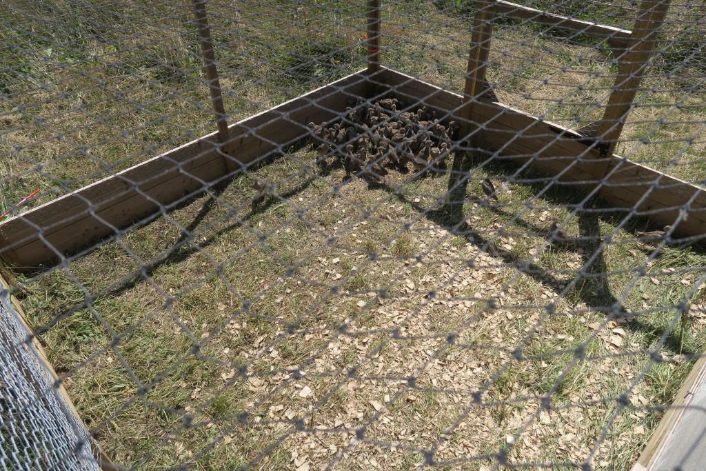 Game Bird Netting - 38 mm (1 ½