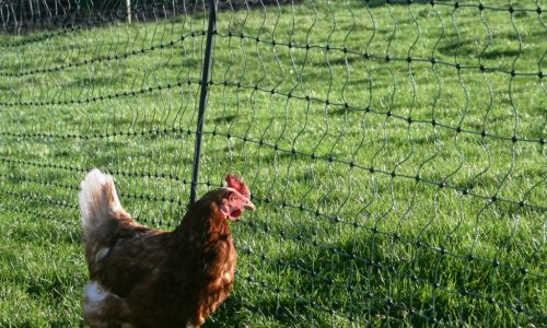electric netting for poultry