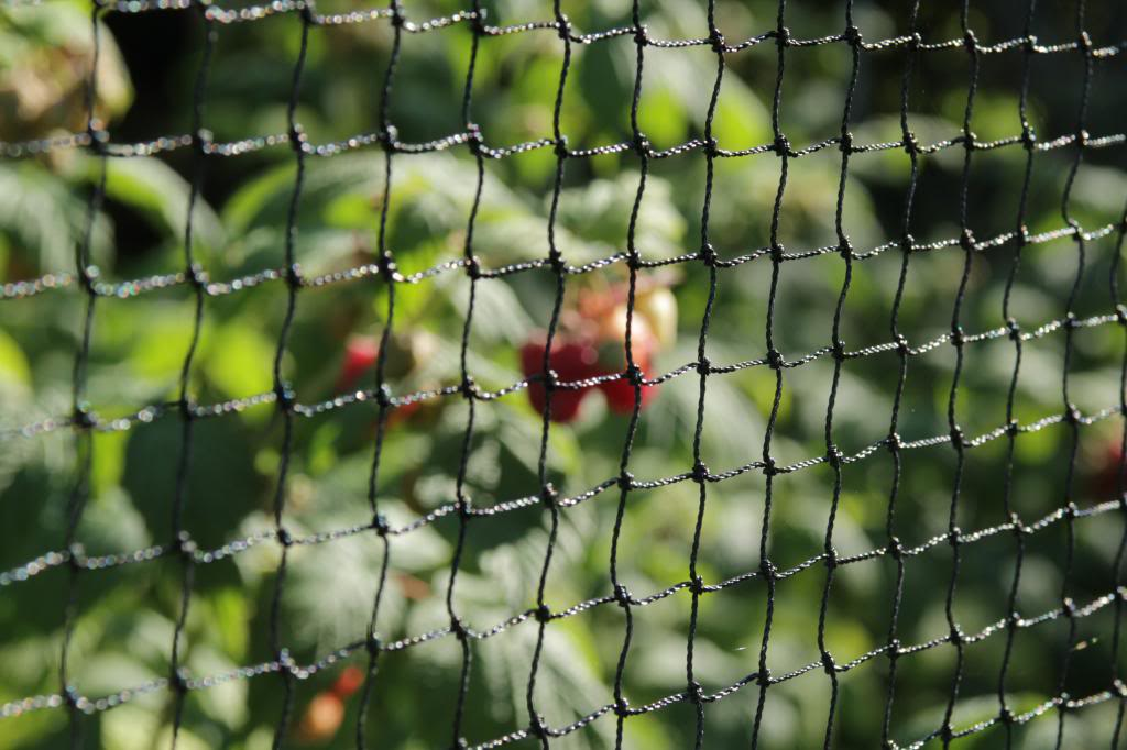 square mesh netting fruit cage