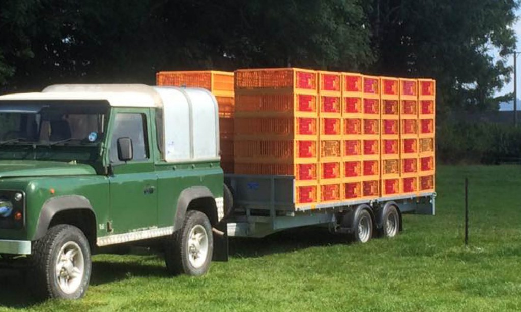 Pheasant Transport Crates. Game carrying cage.