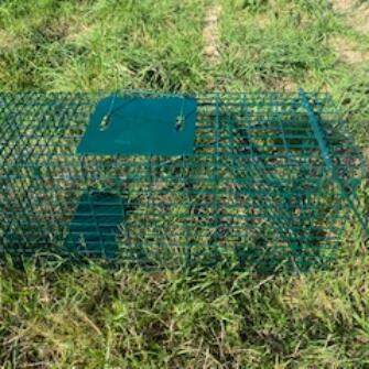 Live Catch Rabbit Trap
