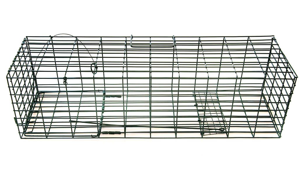 how to catch a wild rabbit in a live trap