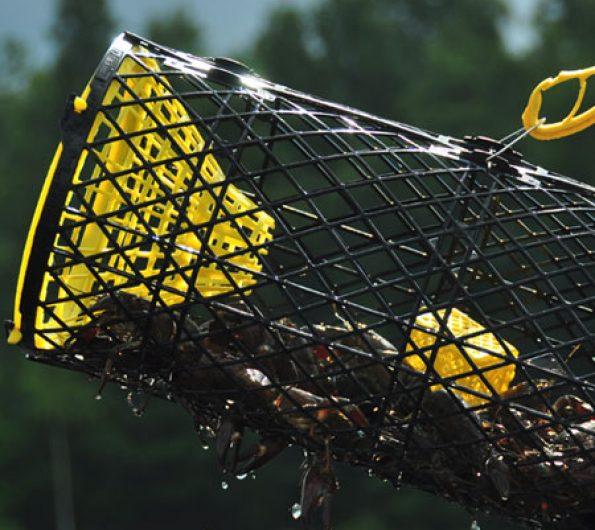 Trappy Original Crayfish Trap