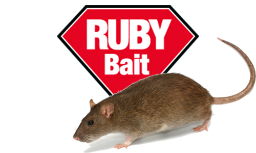 Ruby Grain Rat Bait