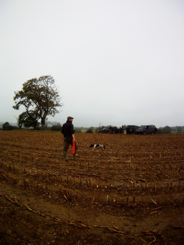 Day out Beating on Eastwood Farm Shoot Somerset