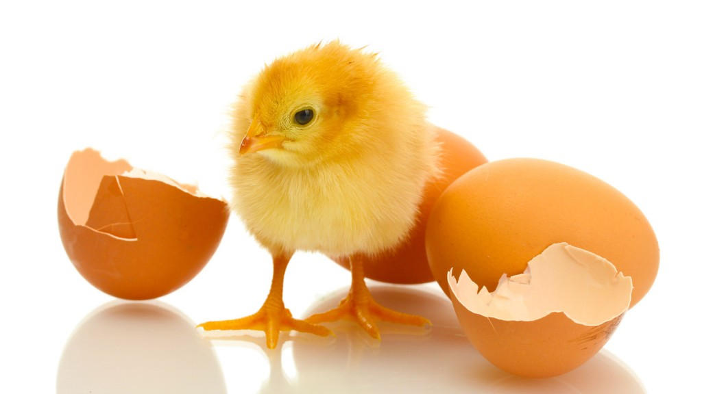 Gamestay Egg & Bone