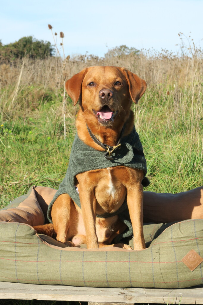 Dog Towelling Robe Danish Design