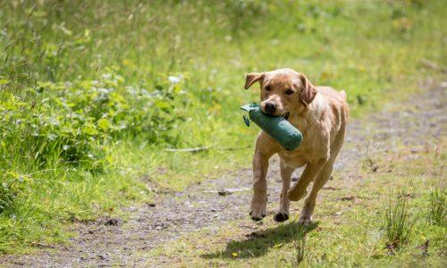 Dog Leads & Training Equipment