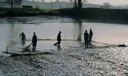 Testimonial from VS Fisheries Ltd