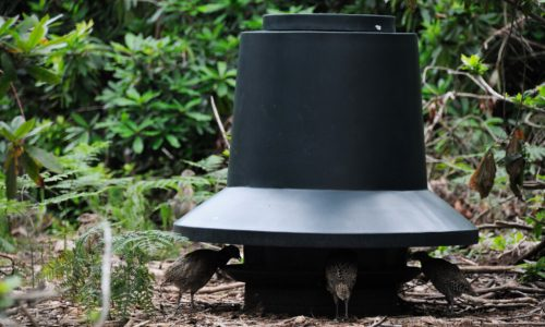 Game & Poultry Feeders
