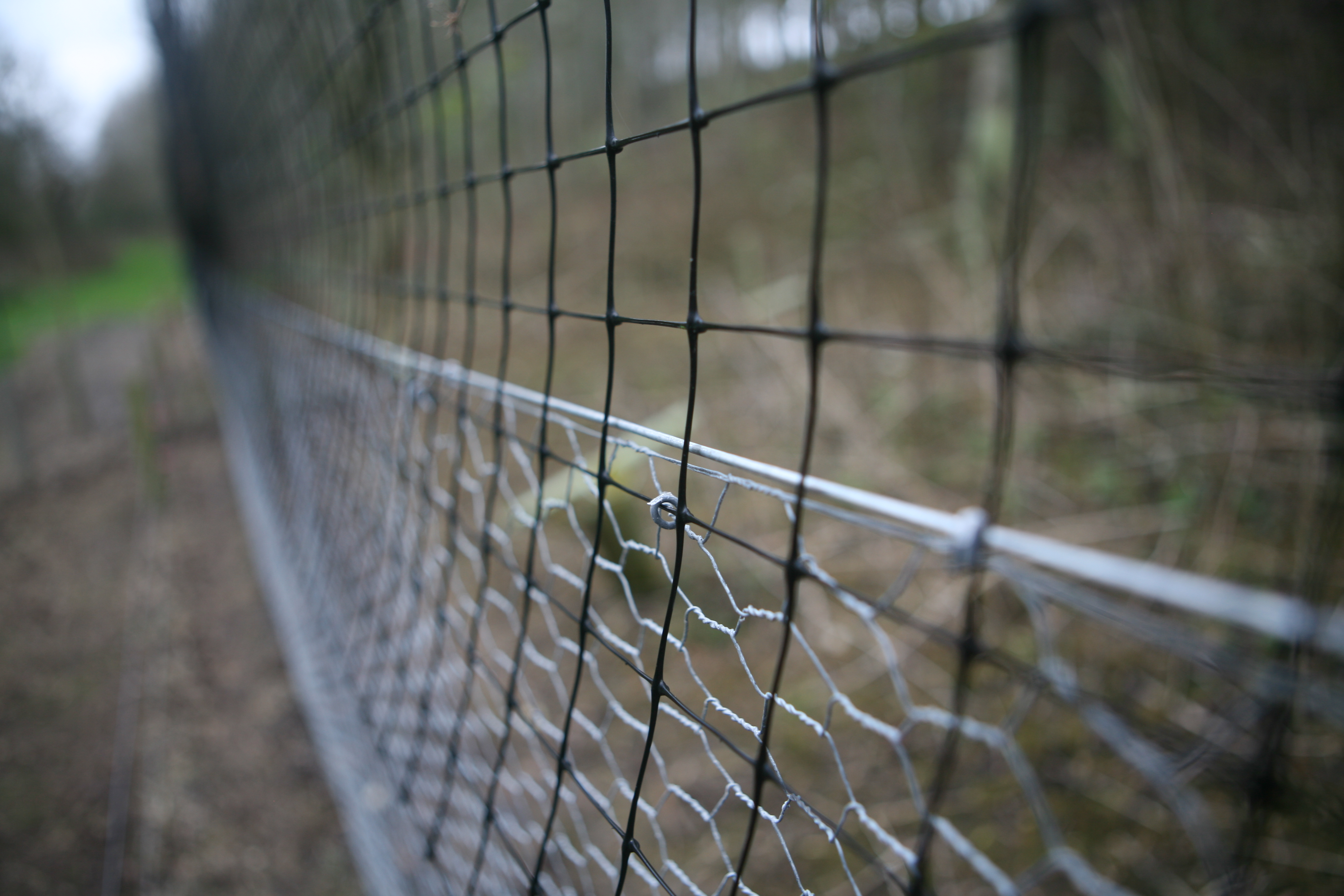 Release pen netting for game bird rearing
